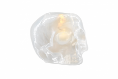 still-life-skull-white-7061400